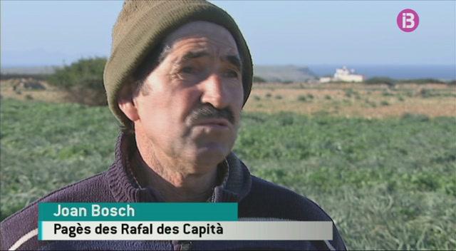 Autoritzen+a+matar+a+tirs+els+corbs+que+es+mengen+les+cries+dels+llocs+a+Menorca