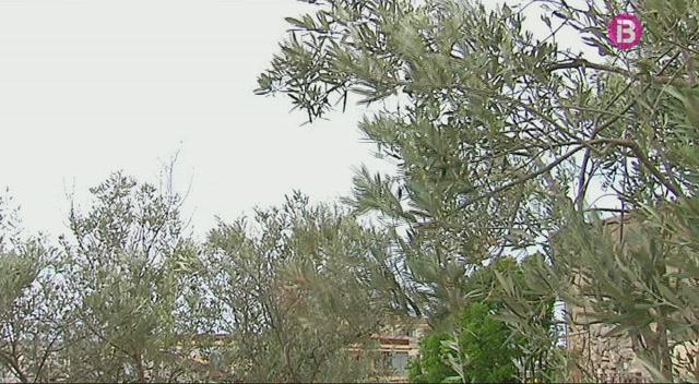 Eivissa+i+12+municipis+de+Mallorca+continuen+en+pre-alerta+per+sequera