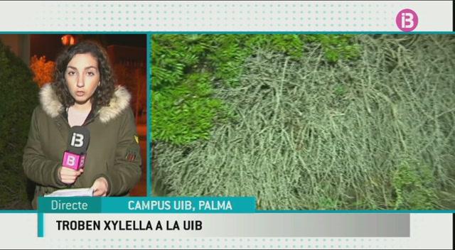 Detectat+un+cas+de+Xylella+a+dues+plantes+de+roman%C3%AD