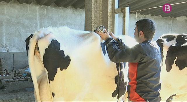 Alaior+es+prepara+per+a+una+nova+edici%C3%B3+de+la+Fira+del+Camp+amb+200+vaques+candidates