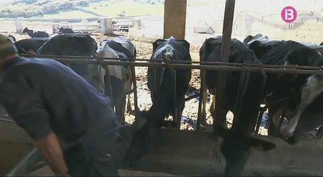 Balears+produeix+m%C3%A9s+llet+per+combatre+la+davallada+dels+preus+despr%C3%A9s+de+la+liberalitzaci%C3%B3