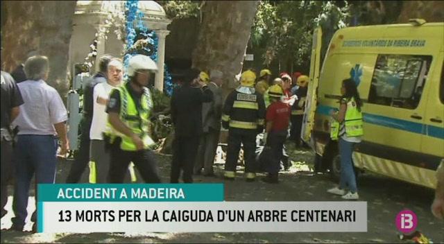 Baixa+a+7+els+ingressats+a+Madeira+per+la+caiguda+de+l%27arbre+que+va+deixar+13+morts