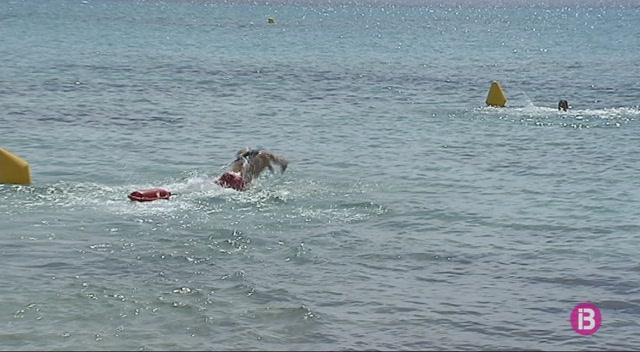 Repunt+de+picades+de+meduses+a+les+platges+de+Menorca