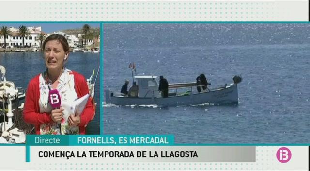 Arranca+la+temporada+de+llagosta+amb+bona+mar