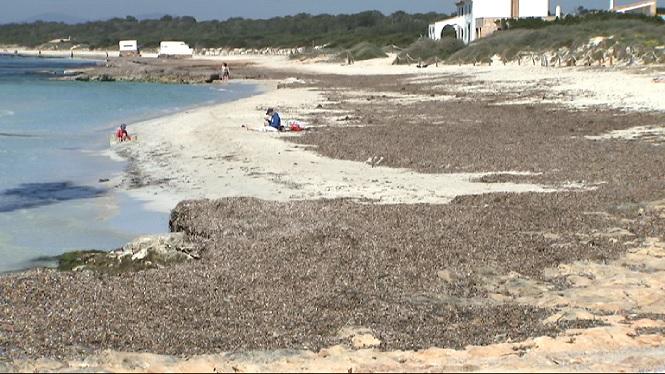 Fins+dia+1+de+Maig+no+es+pot+retirar+la+posid%C3%B2nia+de+les+platges+naturals+de+Balears