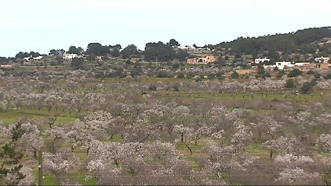 Retrets+de+la+Ministra+d%27Agricultura+al+Govern+Balear+per+la+gesti%C3%B3+de+la+crisis+de+la+plaga+de+la+Xylella