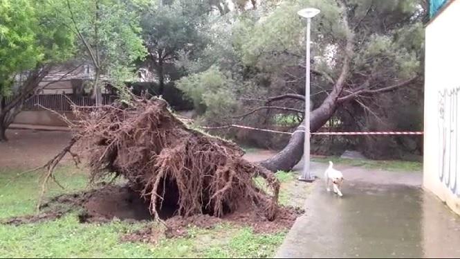 Nit+de+temporal%3A+rescatades+vuit+persones+i+diversos+arbres+caiguts