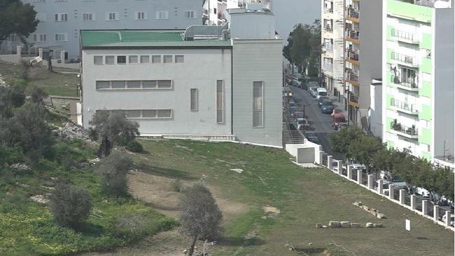 Dos+nous+casos+de+xylella+a+Eivissa