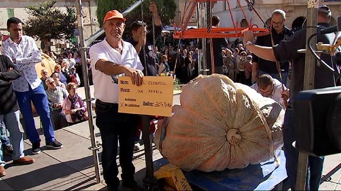 Una+carabassa+de+364+kg+guanya+el+concurs+de++carabasses+de+Muro