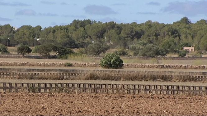 El+Consell+de+Formentera+investiga+el+tractaments+dels+llots+procedents+de+la+depuradora
