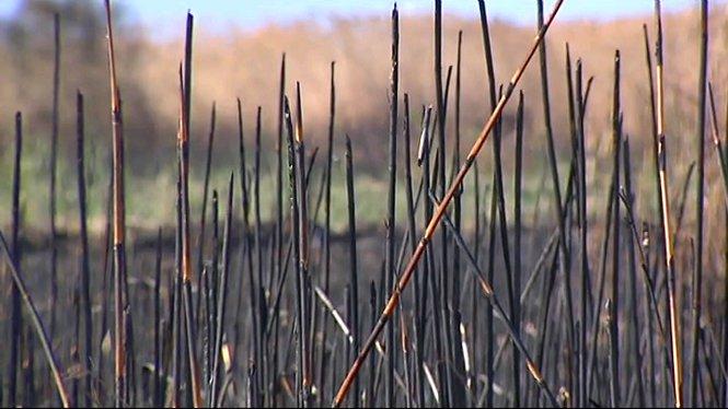 Un+incendi+ha+cremat+40+hect%C3%A0rees+de+canyet+a+l%27Albufera+de+Mallorca