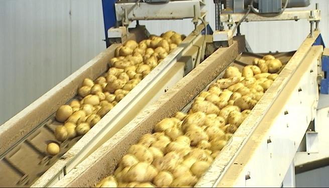El+canvi+clim%C3%A0tic+modifica+el+cicle+de+producci%C3%B3+de+la+patata+de+sa+Pobla