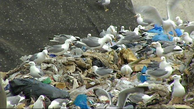 El+Consell+de+Menorca+posa+en+marxa+una+campanya+d%E2%80%99urg%C3%A8ncia+de+reciclatge