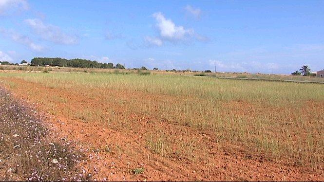 L%E2%80%99illa+de+Formentera+afronta+un+per%C3%ADode+dur+de+sequera+en+qu%C3%A8+els+cultius+es+poden+veure+afectats