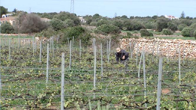 Nous+controls+de+qualitat+del+vi+de+Mallorca