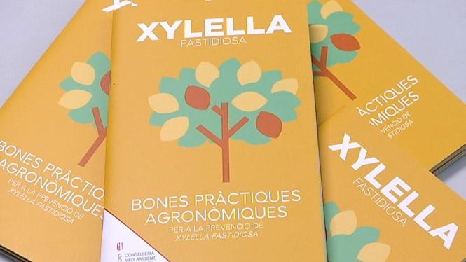 Detectats+102+casos+positius+de+Xylella+de+la+subesp%C3%A8cie+pauca+a+Eivissa