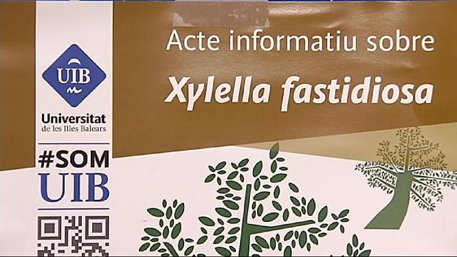 La+Xylella+a+debat