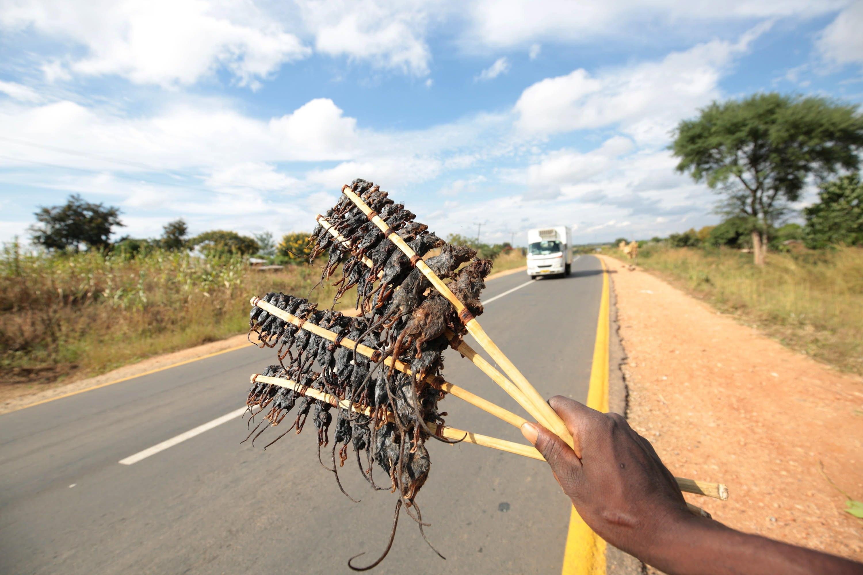 Un home ven ratolins rostits a Salima, a més de 200 km de Blantyre (Malawi). /AARON UFUMELI