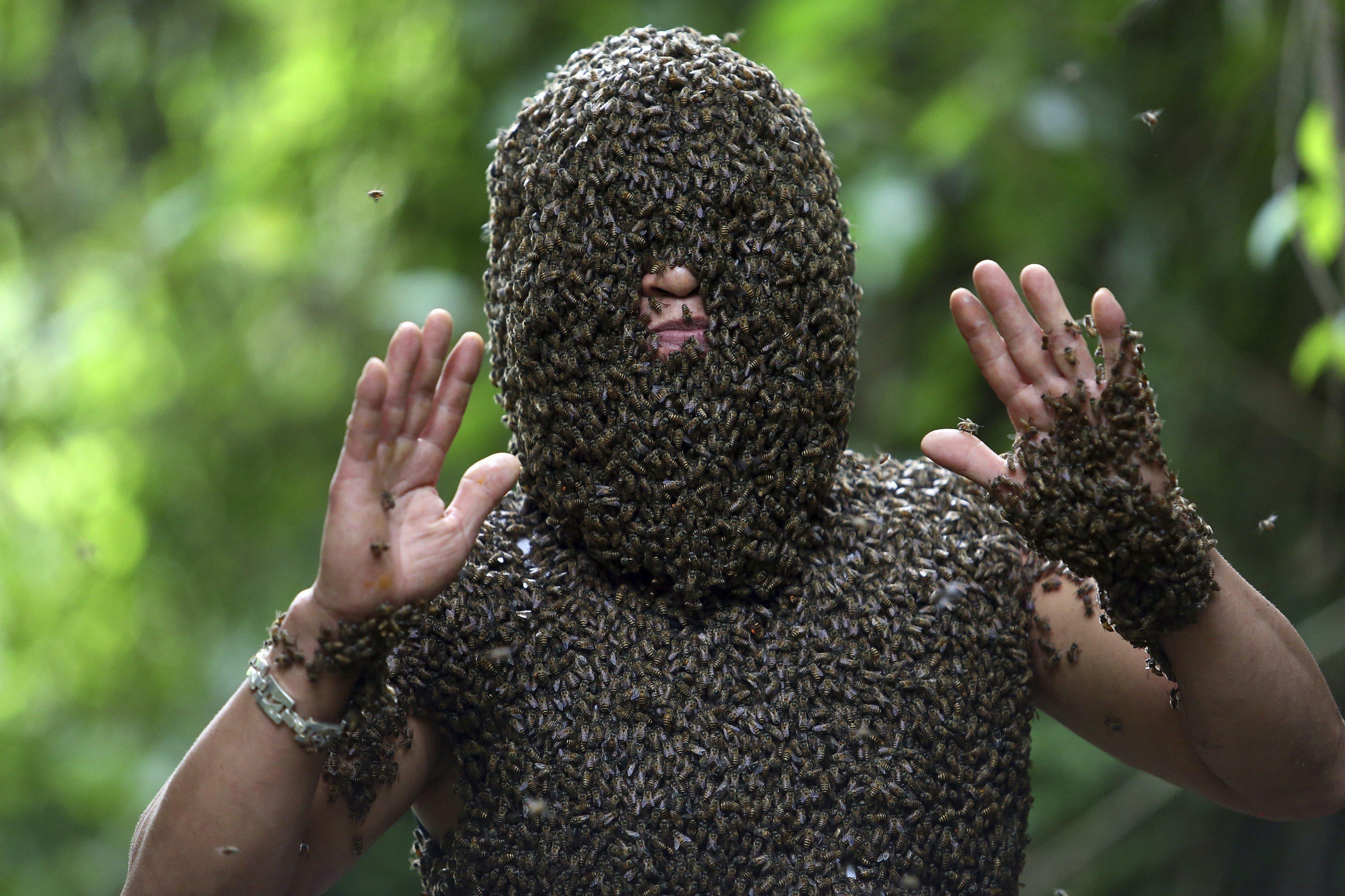 El cuidador d'abelles Bui Duy Nhat posa amb el tors i la cara coberts d'abelles en la comuna de Nua Ngam, a Dien Ben (Vietnam). /PHAM NGOC THANH