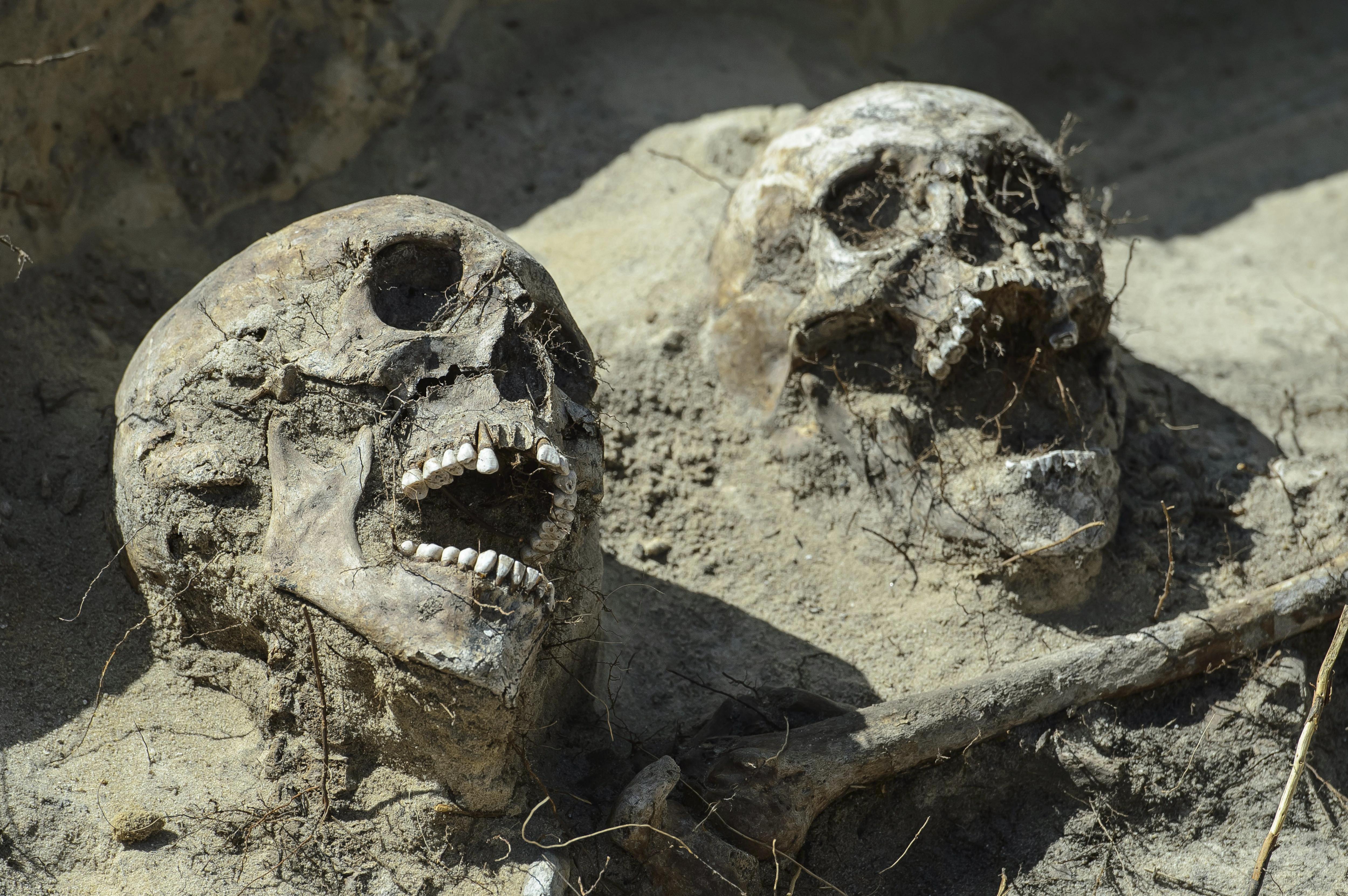 Restes humanes en una excavació on s'ha descobert el que creuen que pot ser una fossa comuna d'uns 80 combatents de la batalla de Zyrzyn (1863), a Zerdz, a l'est de Polònia. /WOJCIECH PACEWICZ