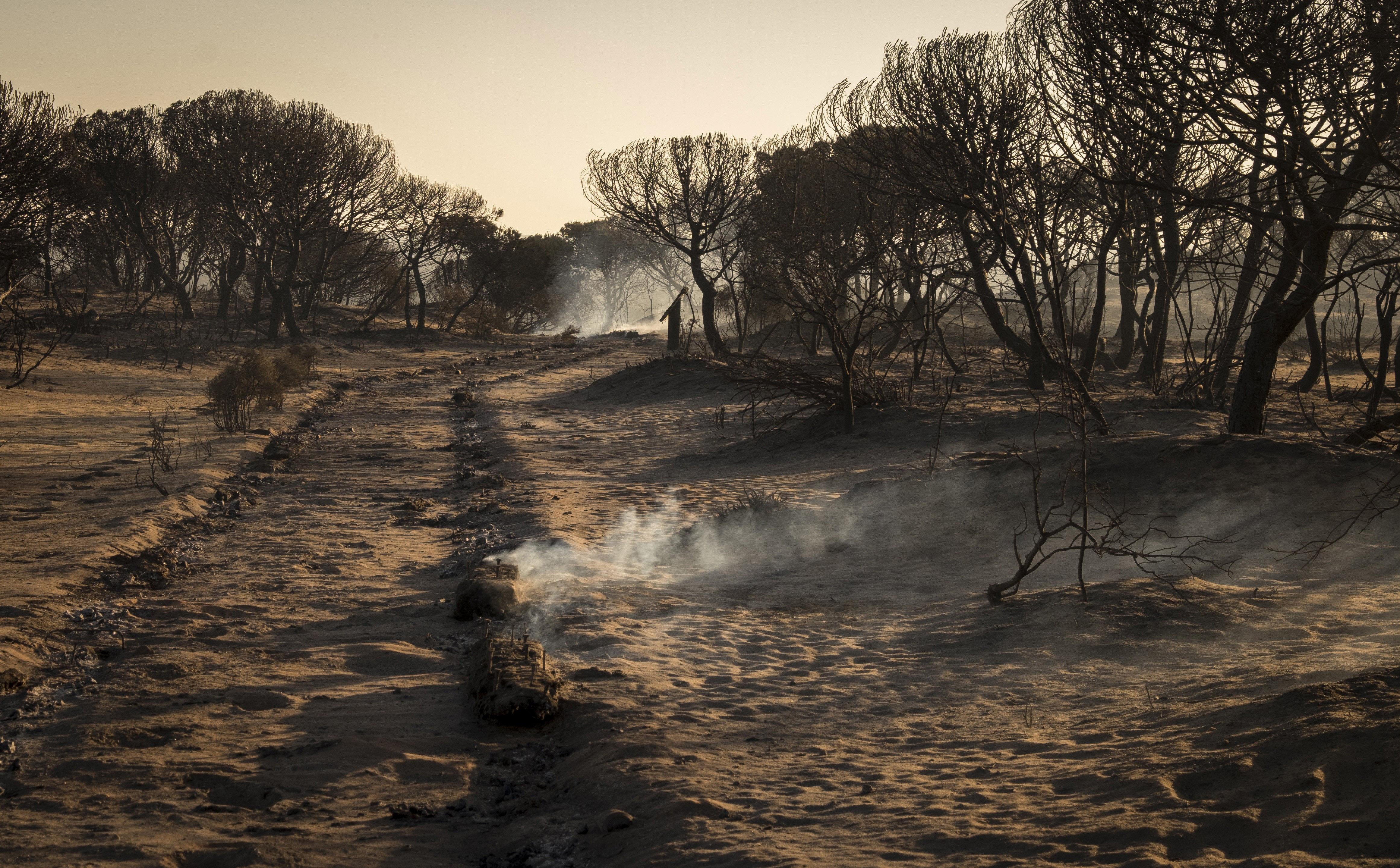 Imatge desoladora de l'incendi que crema a Andalusia des de dissabte. /JULIÁN PÉREZ