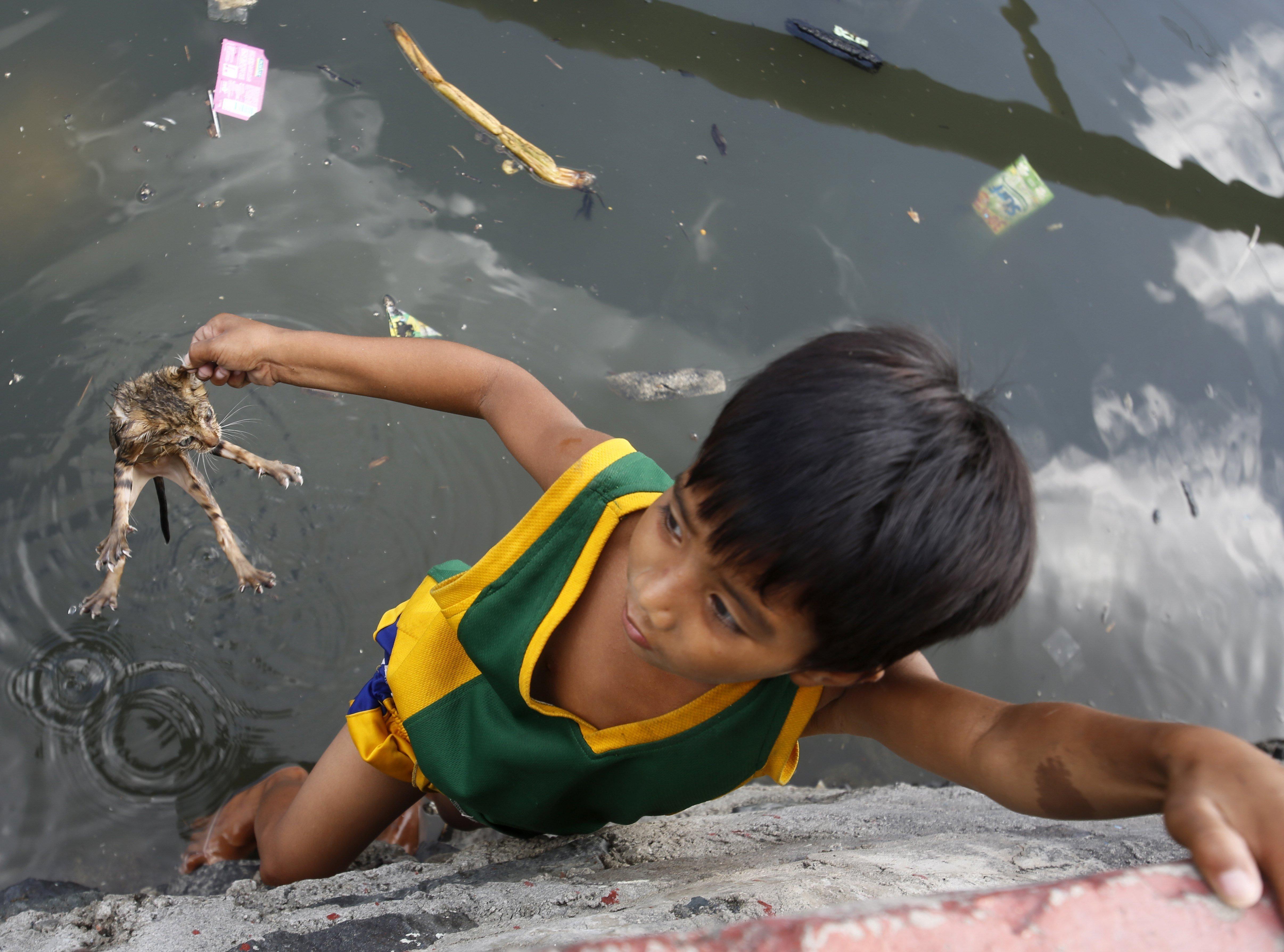 Un nen rescata a una cria de moix que va caure a un riu després d'una operació de demolició de cases en un suburbi al sud de Manila. /FRANCIS R. MALASIG