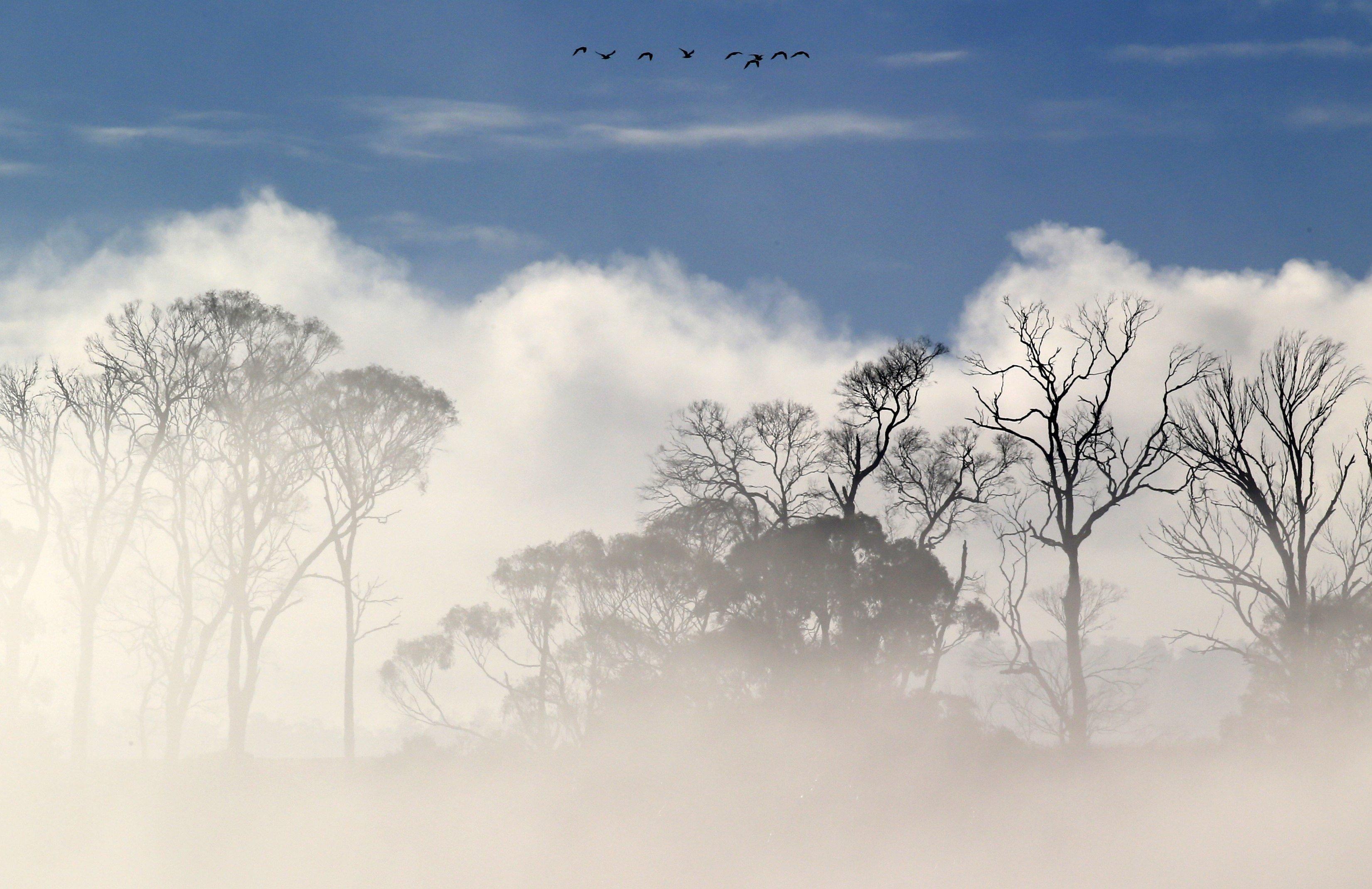 Un esbart d'ocells vola en formació sobre la boira mentre que clareja prop de Launceston, Tasmània (Austràlia). /BARBARA WALTON