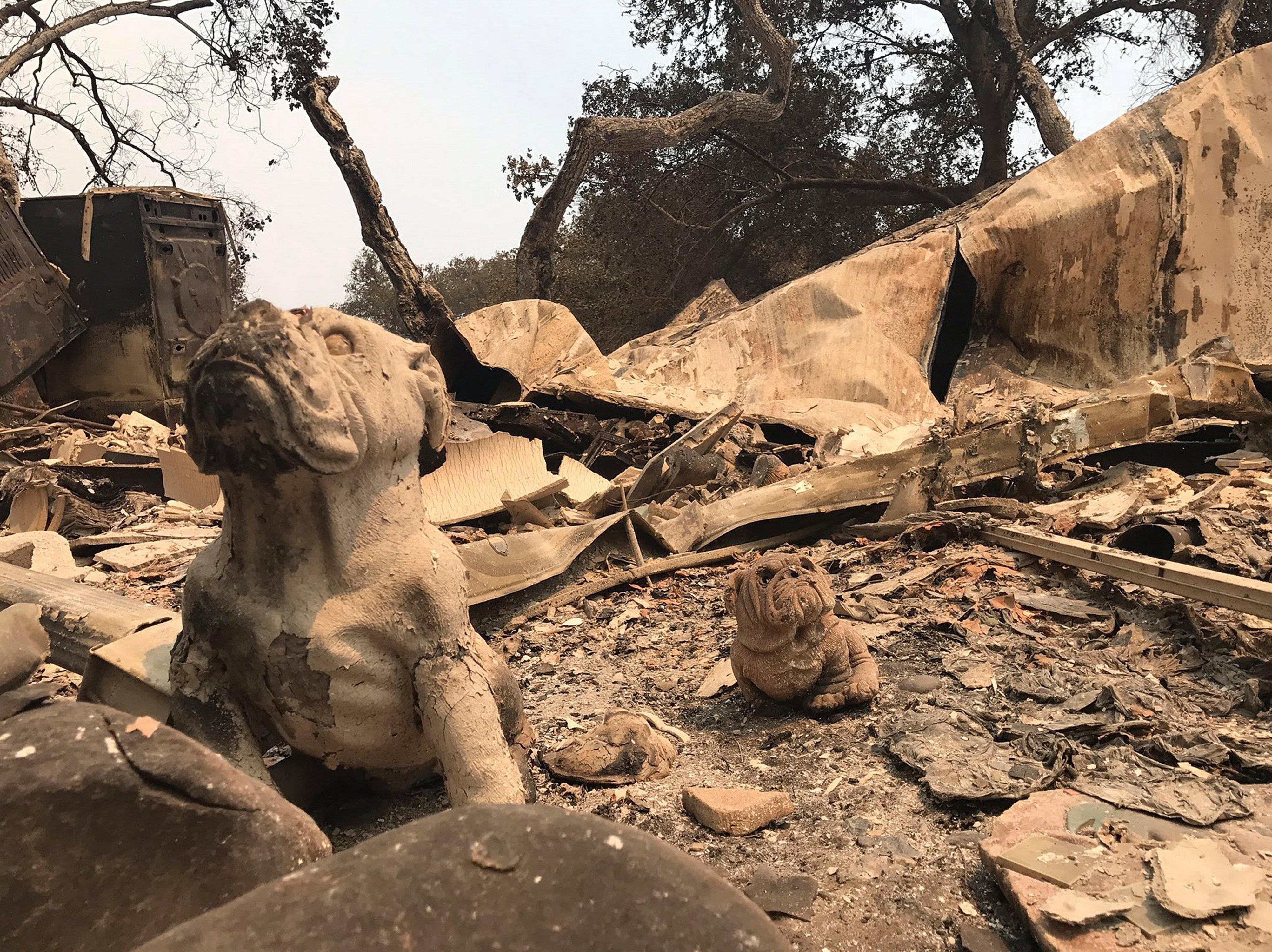 Les altes temperatures als Estats Units i Canadà han provocat incendis forestals en diversos estats i províncies. /MIKE ELIASON