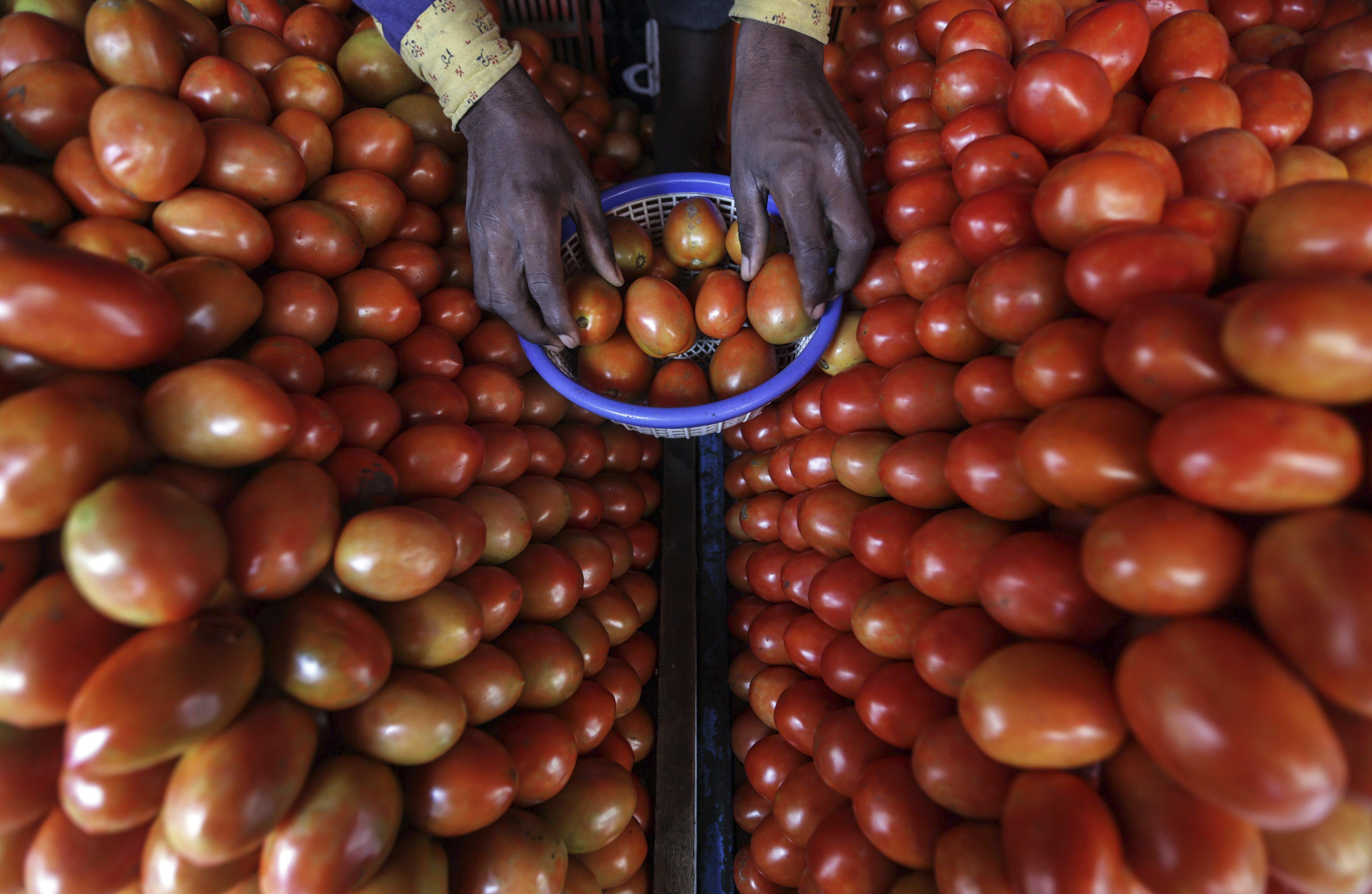 Un venedor col·loca tomàquets en una fruiteria de Mira Road, a Bombai, l'Índia. /DIVYAKANT SOLANKI