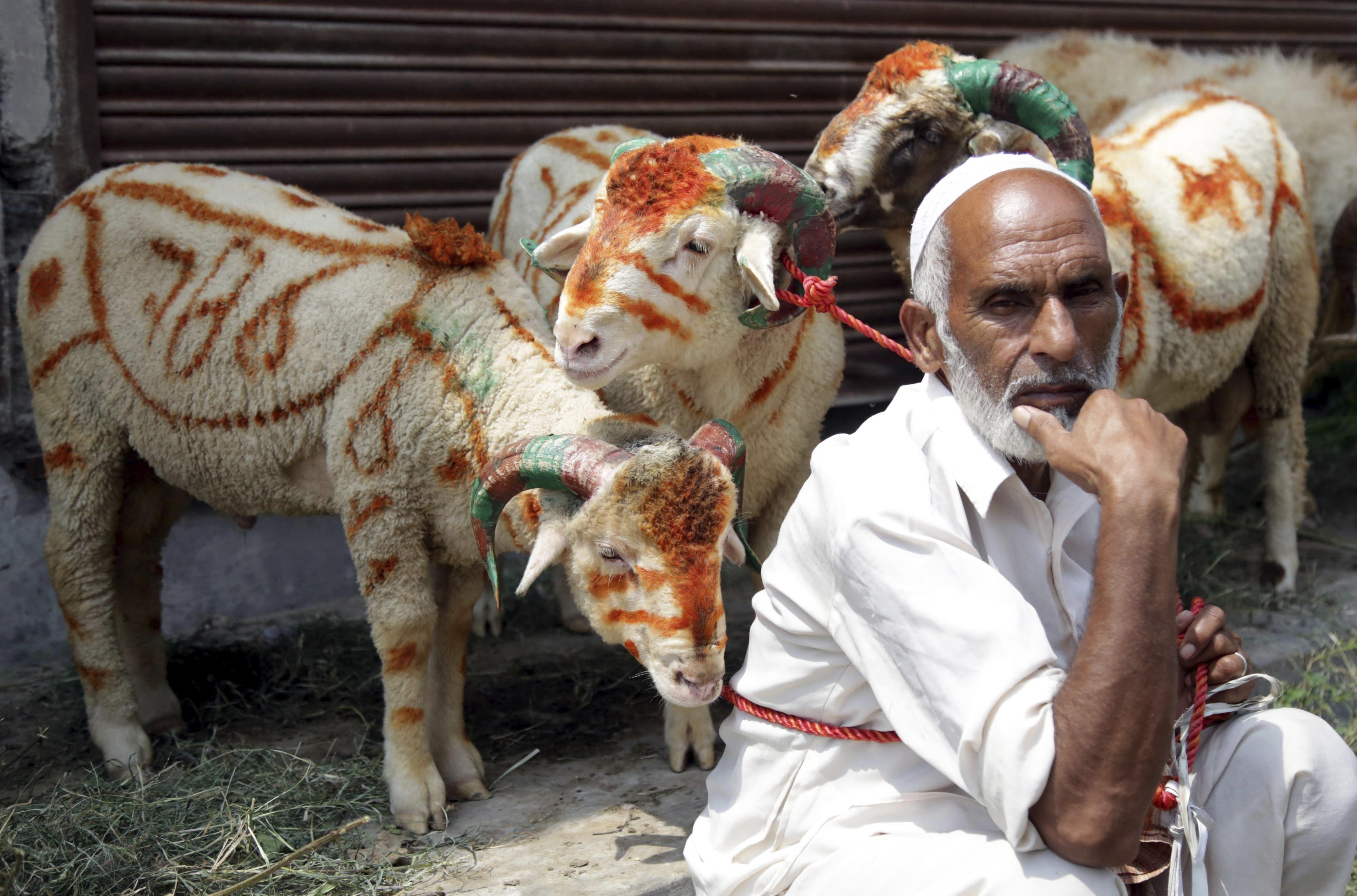 Un venedor d'ovelles en un mercat durant els preparatius per a la festivitat musulmana de l'Eid el Adha, a Jammu. /JAIPAL SINGH