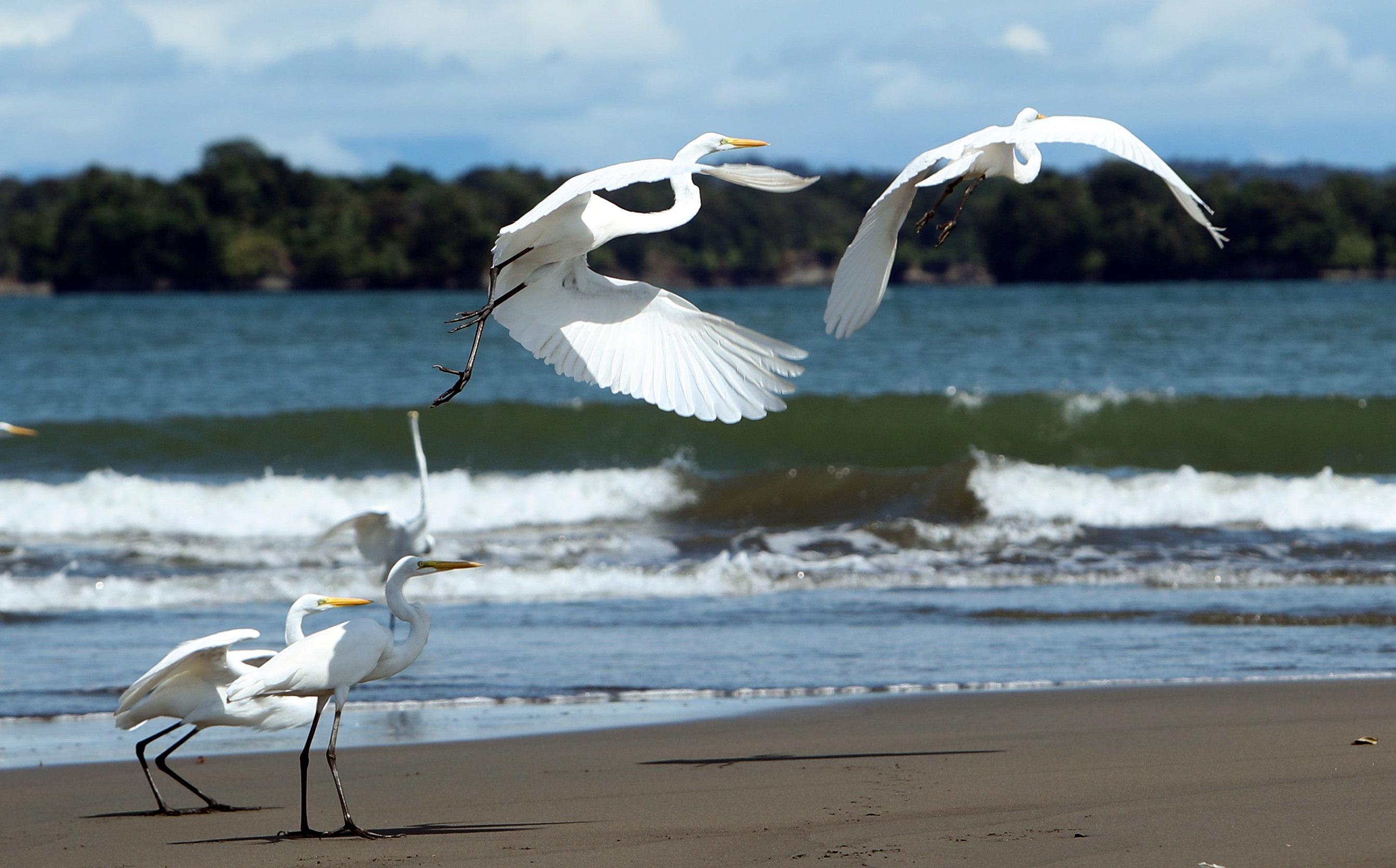 Colòmbia declara 4,5 milions d'hectàrees àrea protegida marina en el Pacífic. Fotografia d'una platja a Ladrilleros. /MAURICIO DUEÑAS CASTAÑEDA