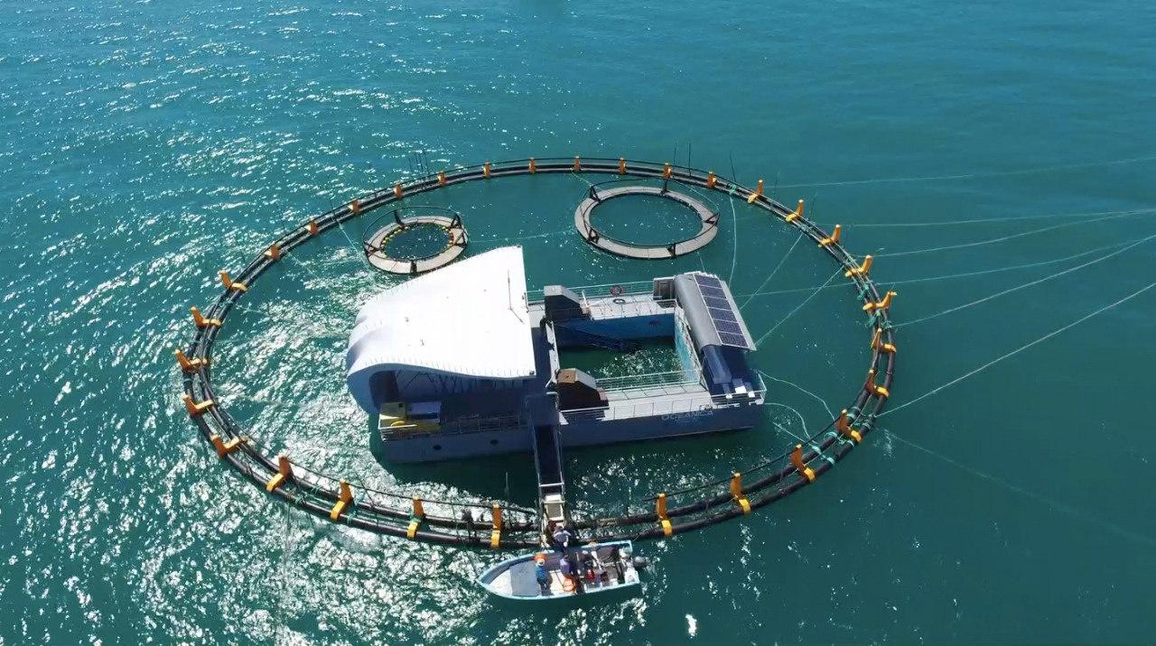 Un aquari de 40 metres de diàmetre espera a les primeres marsopes de Califòrnia que siguin rescatades per les expedicions de cerca a l'Alt Golf de Califòrnia, a Mèxic./SEMARNAT