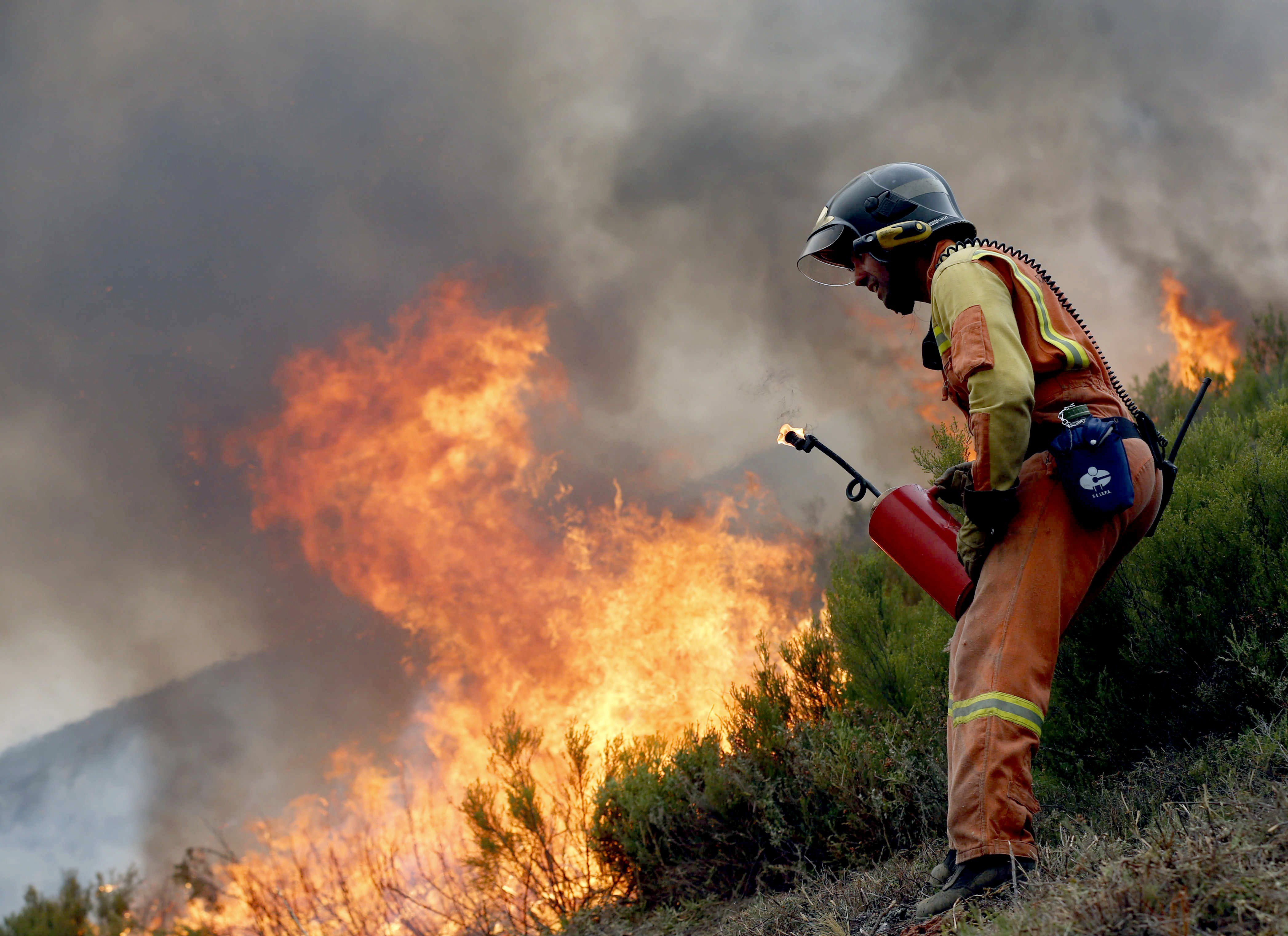 Un bomber realitza un tallafoc als voltants de la Reserva de la Biosfera de Muniellos, la major roureda i millor conservada d'Espanya. Astúries registra fins a 32 incendis forestals que han obligat ja al desallotjament de tres petites localitats de Cangas del Narcea, així com a suspendre les classes a 23 col·legis./José Luis Cereijido