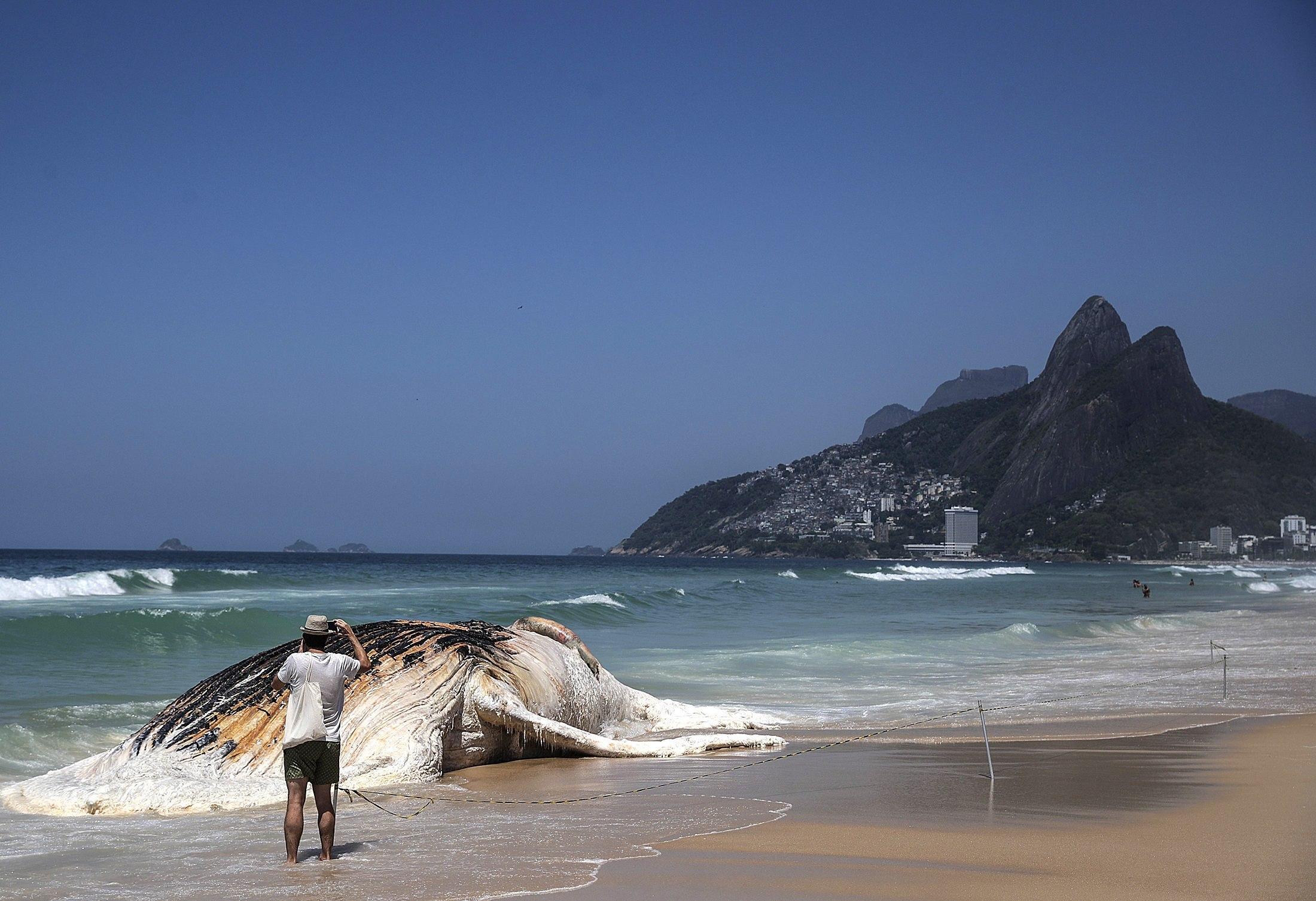 Un home fotografia una balena d'entre 13 i 15 metres que ha aparegut morta a Rio de Janeiro (Brasil). /ANTONIO LACERDA