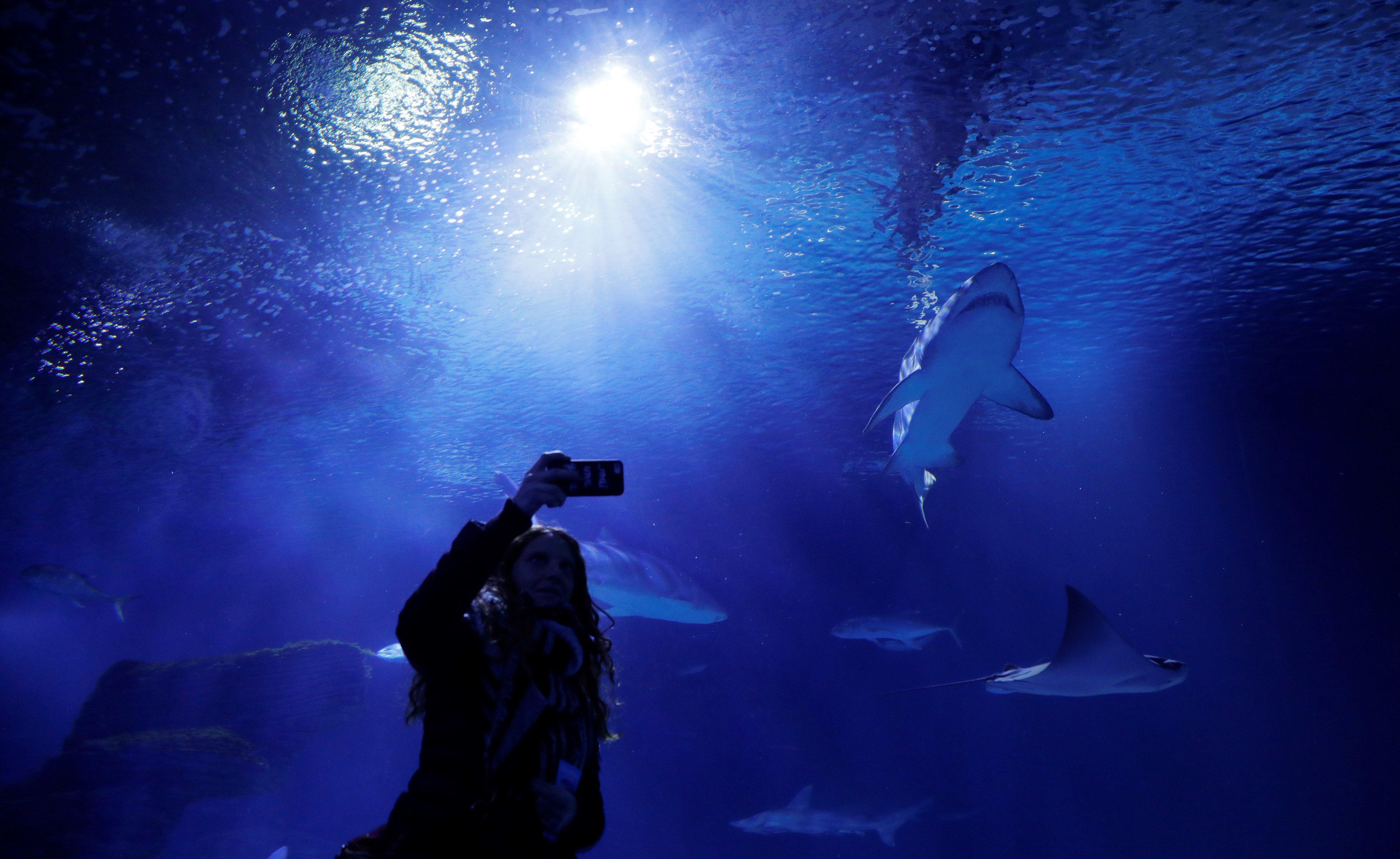 L'oceanògraf Carlos Duarte ha presentat uns sensors per explorar els oceans que utilitzen els últims avanços en nanotecnologia, ciència dels materials i internet de les coses para monitorar animals. València. /KAI FÖRSTERLING