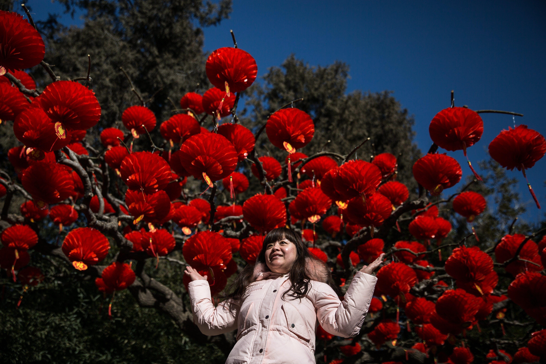 Diverses llanternes vermelles que pengen dels arbres per celebrar l'arribada de l'Any Nou Llunar xinès al parc Ditan, a Pequín (Xina). /ROMAN PILIPEY