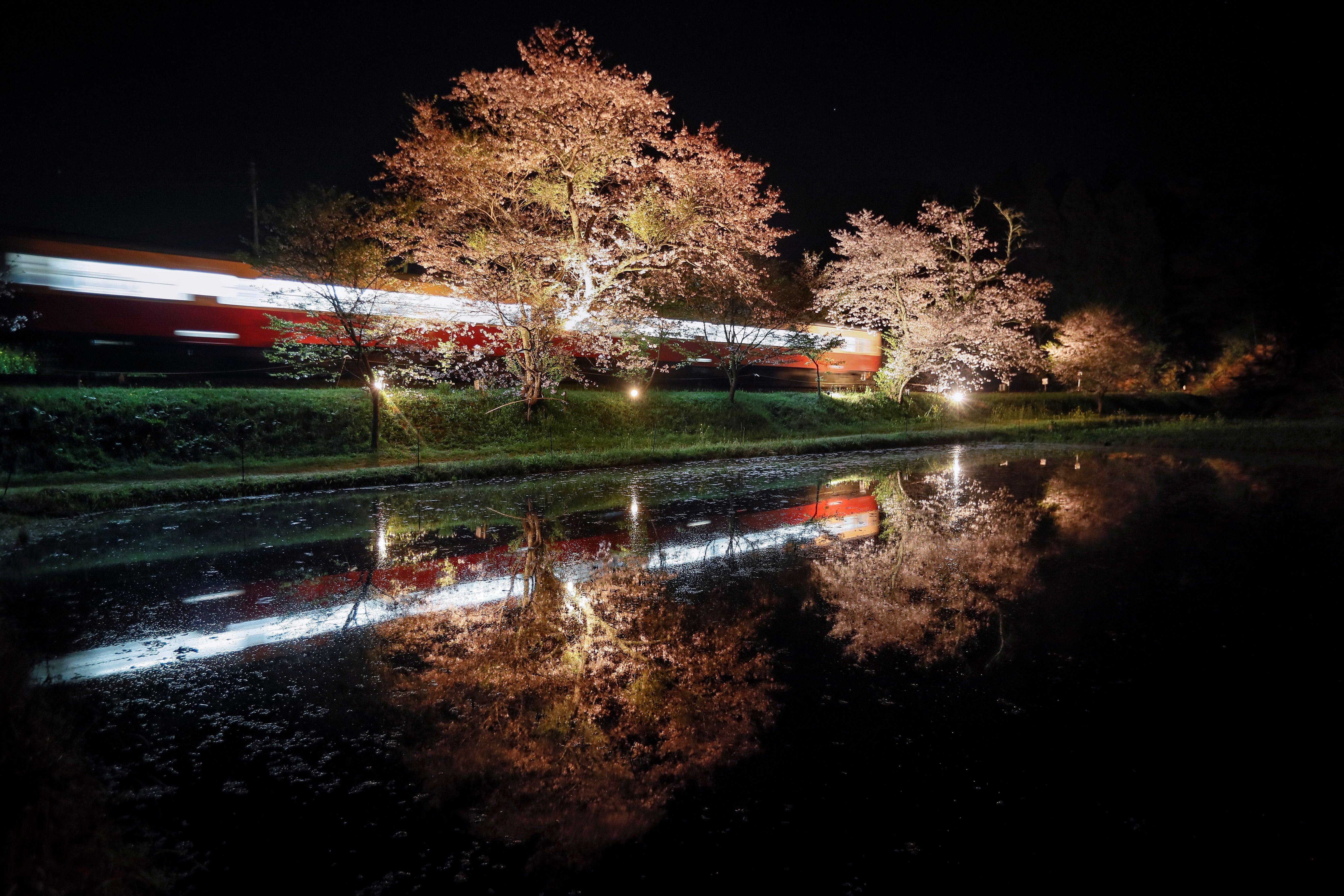 Les aigües d'un arrossar reflecteixen el pas d'un tren i uns cirerers en flor a Ichihara, al Japó. /KIMIMASA MAYAMA