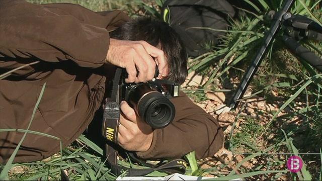 Fotografiam+Orchis+Collina%2C+una+esp%C3%A8cie+d%27orquidea+amb+una+distribuci%C3%B3+molt+limitada