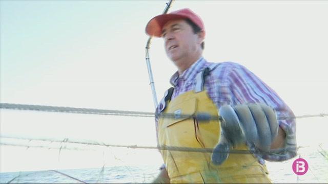 El+Govern+rebutja+la+petici%C3%B3+dels+pescadors+menorquins+d%27ajornar+la+temporada+de+llagosta