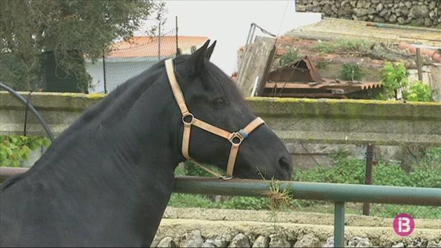 Els+cavalls+de+Menorca%2C+tamb%C3%A9+confinats+i+sense+poder+preparar+les+festes