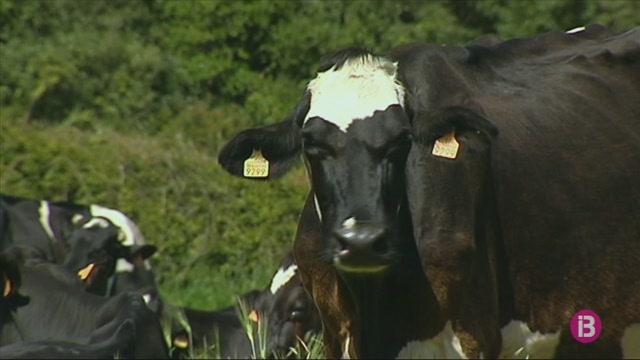 Coinga+continuar%C3%A0+comprant+la+llet+a+les+65+finques+de+Menorca+com+fins+ara