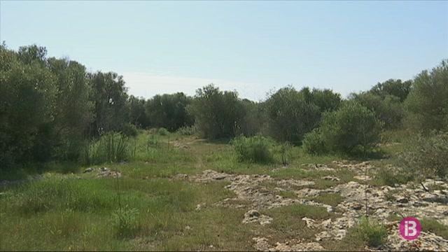La+fauna+i+la+flora+de+Menorca+agraeixen+l%27abs%C3%A8ncia+dels+humans+aquesta+primavera