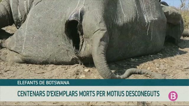 Troben+centenars+d%27elefants+morts+a+Botswana+per+motius+desconeguts
