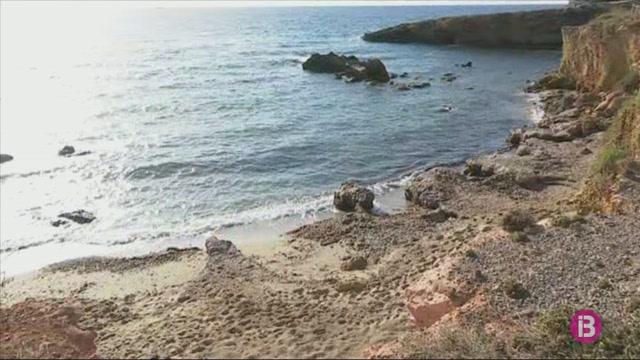Una+tortuga+marina+ha+posat+99+ous+a+Cala+Nova