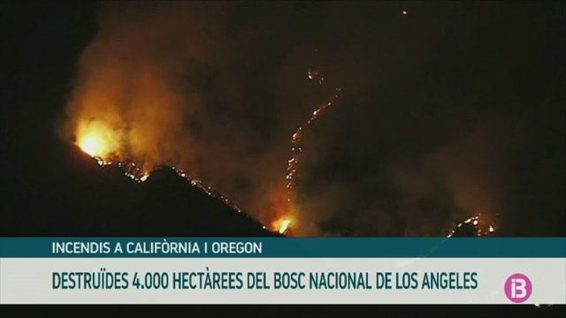Un+incendi+crema+m%C3%A9s+de+4.000+hect%C3%A0rees+del+Bosc+Nacional+de+Los+Angeles