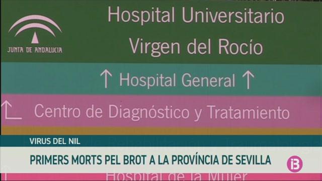 Primeres+dues+v%C3%ADctimes+mortals+de+la+frebre+del+Nil+pel+brot+que+afecta+a+Sevilla