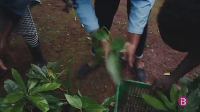 Una+empresa+pionera+proposa+regalar+arbres+plantats+virtualment+per+fer+net+l%27atmosfera