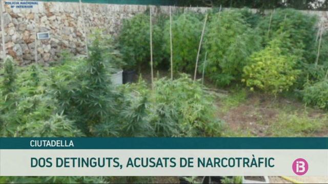 La+Policia+Nacional+det%C3%A9+a+Ciutadella+un+home+i+una+dona+amb+232+plantes+de+marihuana