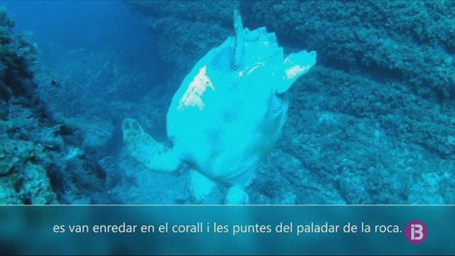 Troben+morta+una+tortuga+marina+a+Menorca
