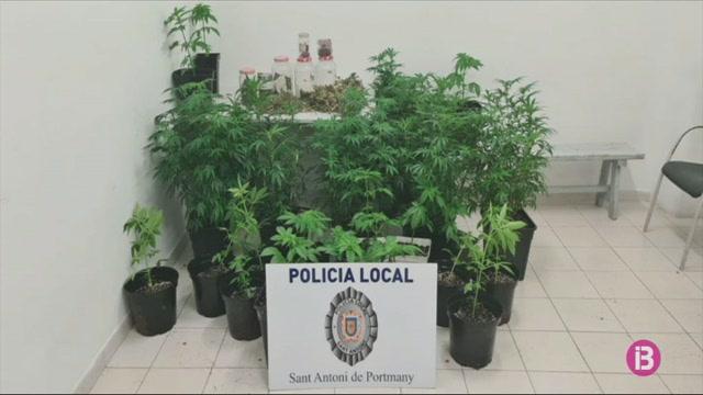 La+Policia+de+Sant+Antoni+incauta+27+plantes+de+marihuana+en+un+domicili+de+Can+Tom%C3%A0s